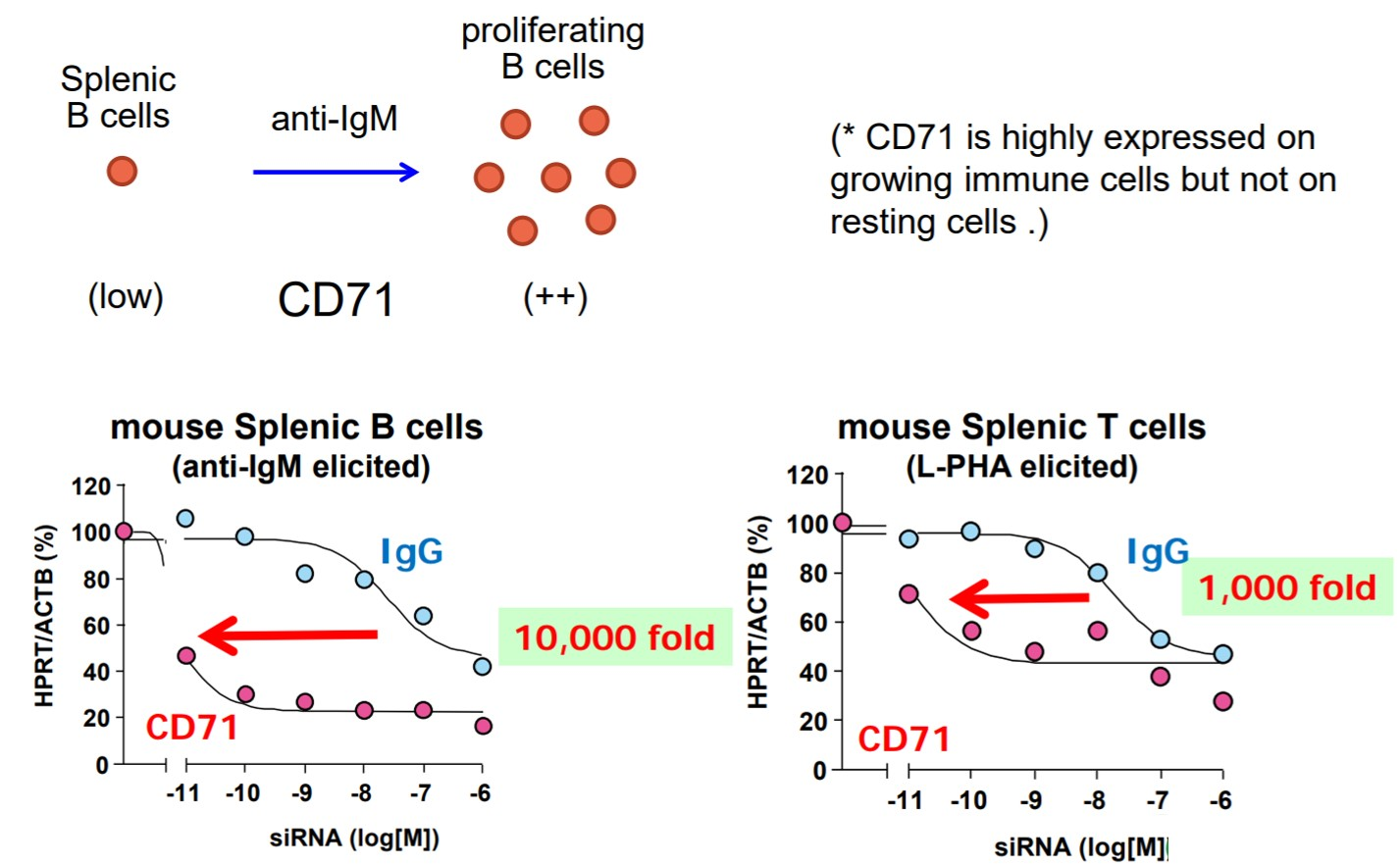 In vitro knock-down activities against CD71-positive cells
